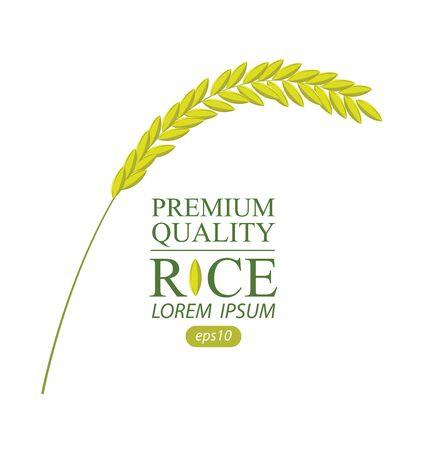 Rice on white background. vector illustration.