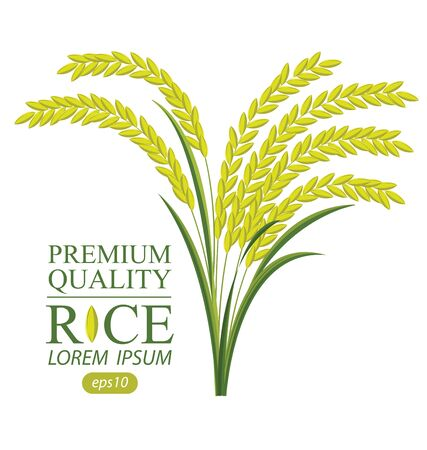 Rice. Vector illustration. Stock Illustratie