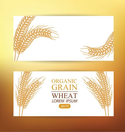 Ears of wheat. Design Banner Template. Vector illustration.