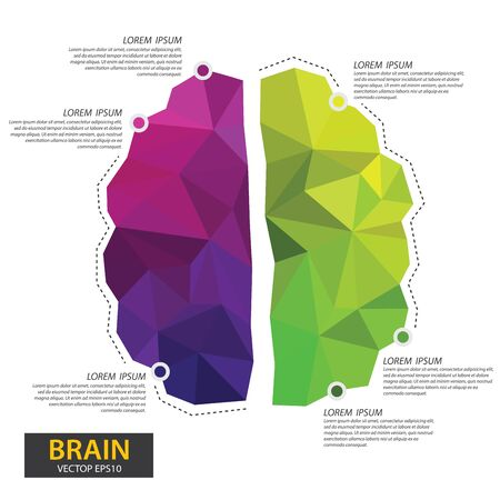 Left and right human brain concept. Infographics brain design. Polygonal art style. Modern geometric graphic. Triangle vector illustration.