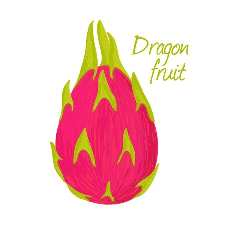Dragon fruit, fruit doodle drawings vector illustration.