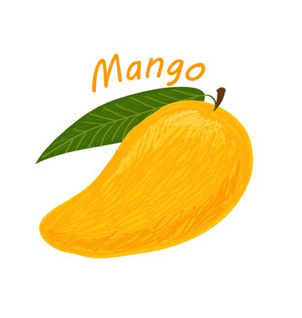 Mango, fruit doodle drawings vector illustration