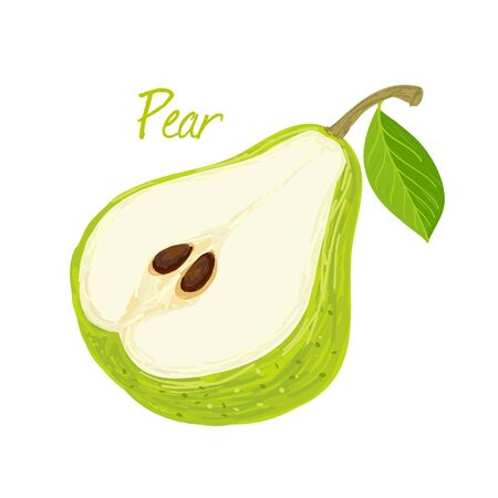 Pear, fruit doodle drawings vector illustration. Иллюстрация