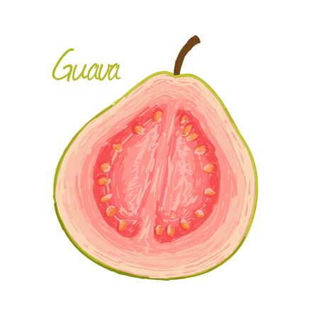 Guava, fruit doodle drawings vector illustration.