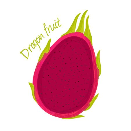 Dragon fruit doodle drawings vector illustration.