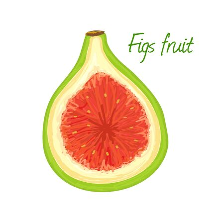 Figs fruit doodle drawings vector illustration.