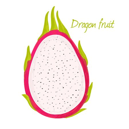 Dragon fruit or Pitahaya doodle drawings vector illustration.