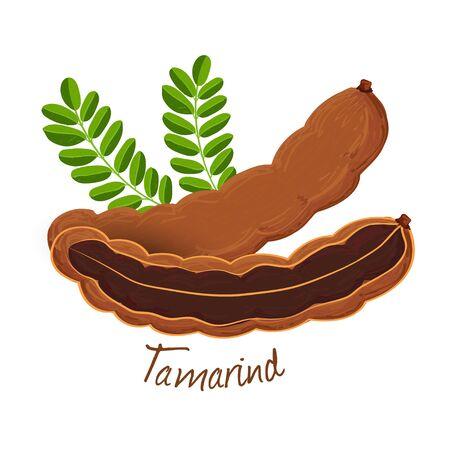 Tamarind, fruit doodle drawings vector illustration.