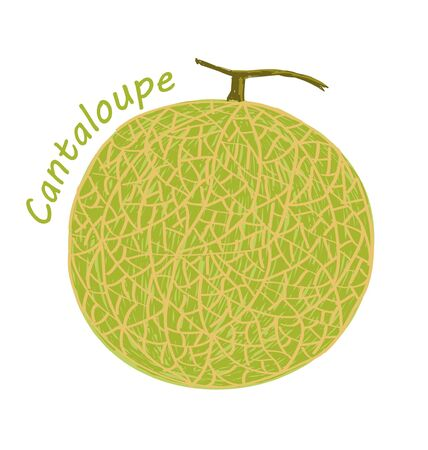 Cantaloupe, fruit doodle drawings vector illustration.