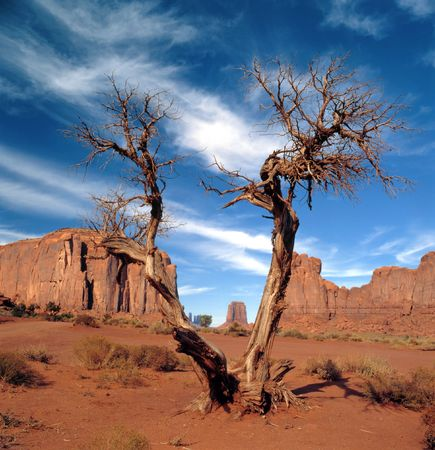 joshua tree: Rock formations with sage brush and a Joshua tree in the Navajo park Monument Valley