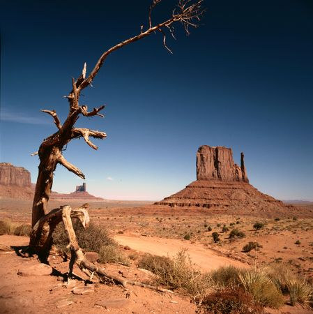 Rock formations with sage brush and a Joshua tree in the Navajo park Monument Valley