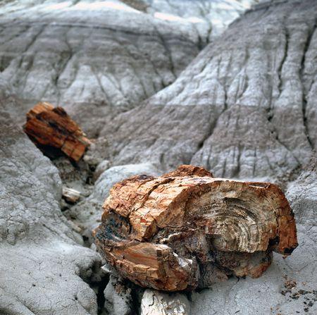 silica: Un registro pietrificato ha crystalized in molti colori di vari formati da silice, ferro, carnbon, manganese e altri colori minerals.The di ocra e rosso in questo esemplare scavato dal parco nazionale di foresta pietrificata in Arizona sono il risultato di minerali di ferro che in modo  Archivio Fotografico