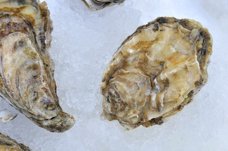 sours: Oysters on ice at a market in France