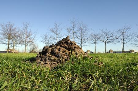 molehill: A molehill on green gras at background roofs of a modern neighbourhood
