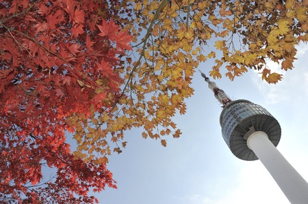 maples: Seoul Tower and red autumn maple leaves at Namsan mountain in South Korea