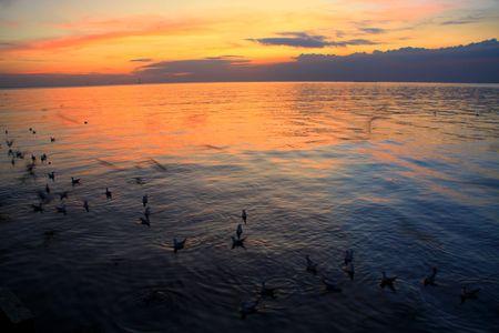 Bright sea sunset  photo