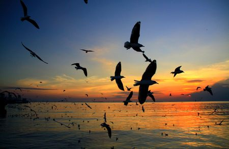 Bright sea sunset with flying seagulls