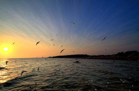 Bright sea sunset with flying seagulls, Thailand photo