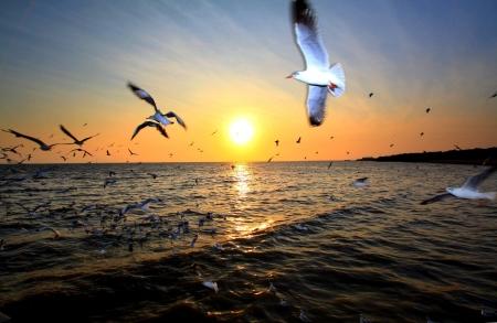 Hell Meer Sonnenuntergang mit Flugfähigkeit Möwen, Thailand