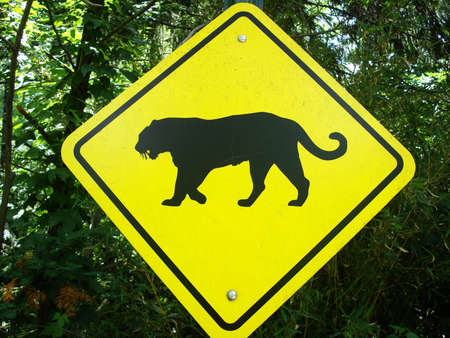 Tiger Crossing Sign                                photo