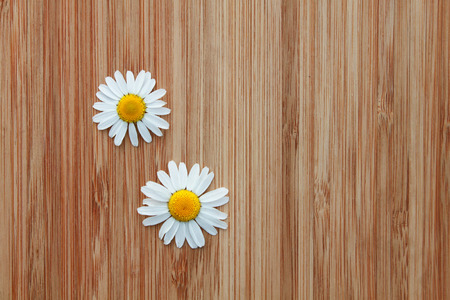 Beautiful and small daisies photo