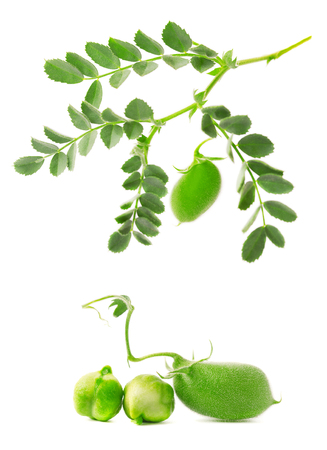 green bean: Green chickpea on a branch, and in the pod isolated on white background