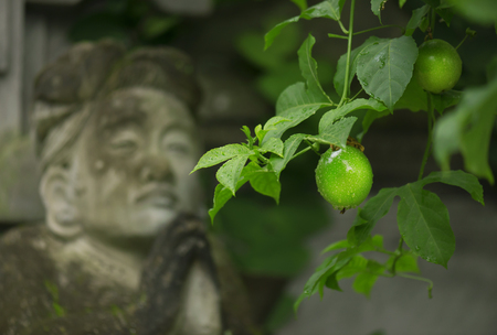 Lime green grows on the tree on the background of the sculpture women praying Stock Photo
