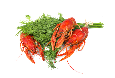 Fresh boiled red crayfish with dill isolated on white background