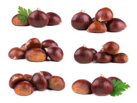 Fresh chestnuts isolated on white background. Hippocastanum isolated. Stock Photo