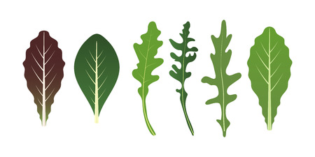 Mix of salad leaves. Arugula, spinach and lettuce leaf. Vector illustration set in flat style Stock Vector - 114866688