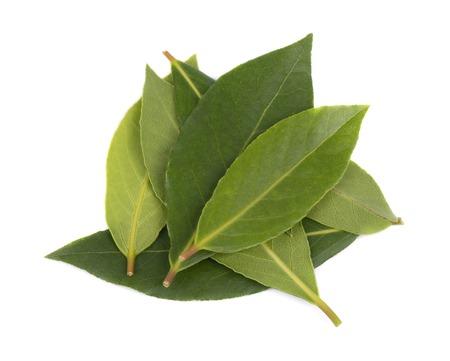 Verse groene bladeren van laurierblad geïsoleerd op een witte achtergrond. Laurus geïsoleerd. Stockfoto