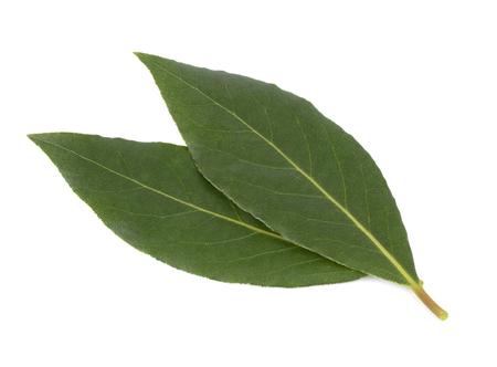 베이 리프 흰색 배경에 고립의 신선한 녹색 잎. Laurus 절연. 스톡 콘텐츠 - 107407261