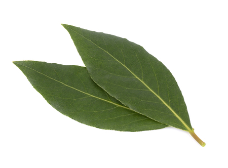 Fresh green leaves of bay leaf isolated on white background. Laurus isolated.