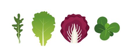 Mezcla de hojas de ensalada. Rúcula, lechuga, berros y achicoria. Ilustración de vector en estilo plano.