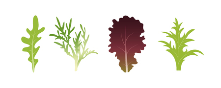 Mix of salad leaves. Arugula, spinach and lettuce leaf. Vector illustration set in flat style Stock Illustratie