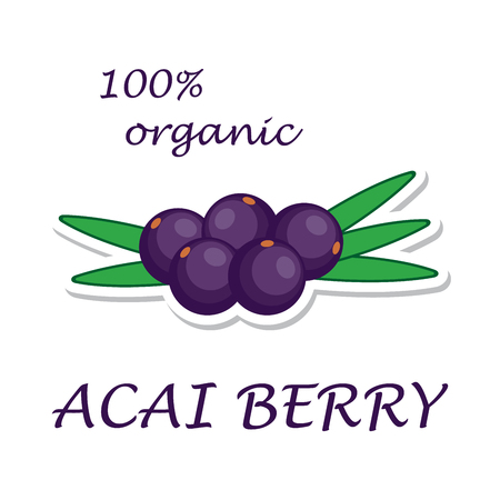 Acai berries. Organic ingredient. Healthy eco food. Sticker isolated on white background. Vector illustration.