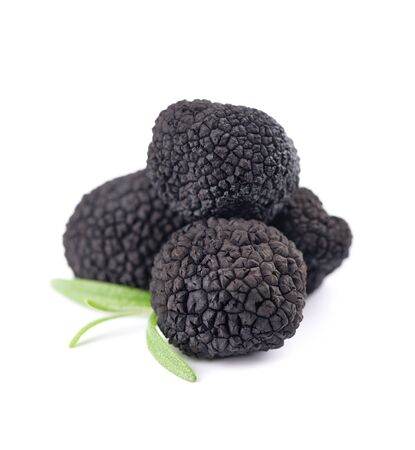 Black truffles isolated on a white background. Fresh truffle with rosemary branch. Delicacy exclusive truffle mushroom. Piquant and fragrant French delicacy.
