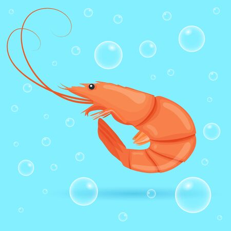 Cute shrimp on blue background with bubbles. Brightly-coloured ocean shrimp. Underwater marine wild life. Vector illustration  イラスト・ベクター素材