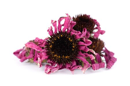 Dried Echinacea flowers, isolated on white background. Petals of Echinacea purpurea. Medicinal herbs