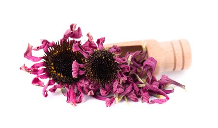 Dried Echinacea flowers on wooden spoon, isolated on white background. Petals of Echinacea purpurea. Medicinal herbs