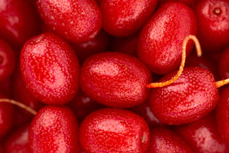 Elaeagnus multiflora background. Cherry elaeagnus, gumi, cherry silverberry or goumi