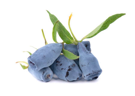 Fresh honeysuckle blue berry fruits with leaf, isolated on white background