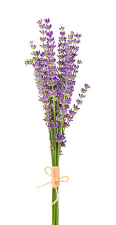 Bunch of lavender flowers, isolated on white background. Petals of lavender flowers. Medicinal herbs
