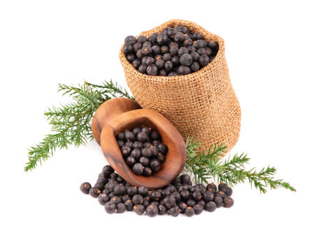 Dry juniper berries in small burlap sack with green branch, isolated on white background. Common Juniper fruits