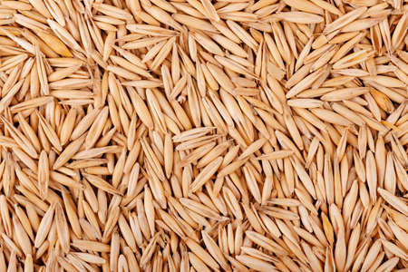 Unpeeled oat grains, background. Organic dry oat seeds