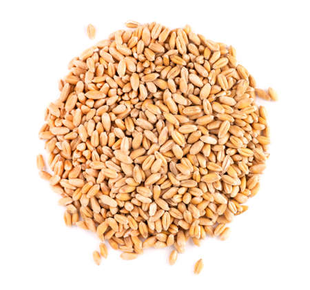 Wheat grains isolated on white background. Processed organic dry wheat seeds. Top view. 스톡 콘텐츠