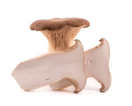 King oyster mushroom isolated on white background. Pleurotus eryngii mushroom.