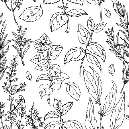 black and white line drawing: Pattern herbs. Spices. Italian herb drawn black lines on a white background. Vector illustration. Basil, Parsley, Rosemary, Sage, Bay, Thyme, Oregano, Mint