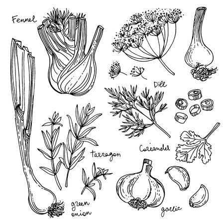 Kruiden. Spices. Italiaanse kruiden getrokken zwarte lijnen op een witte achtergrond. Stock Illustratie