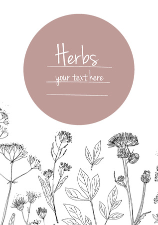 calendula: Herbs and flowers painted black line. Space for text. Vector drawing. Template with a sketch of herbs.